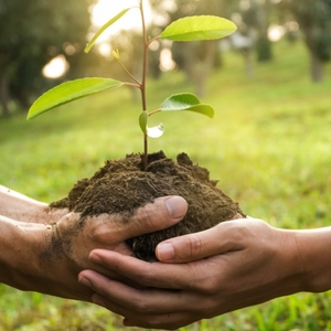 EARTH DAY: Plant 3 Million Trees FREE SEED PACKETS